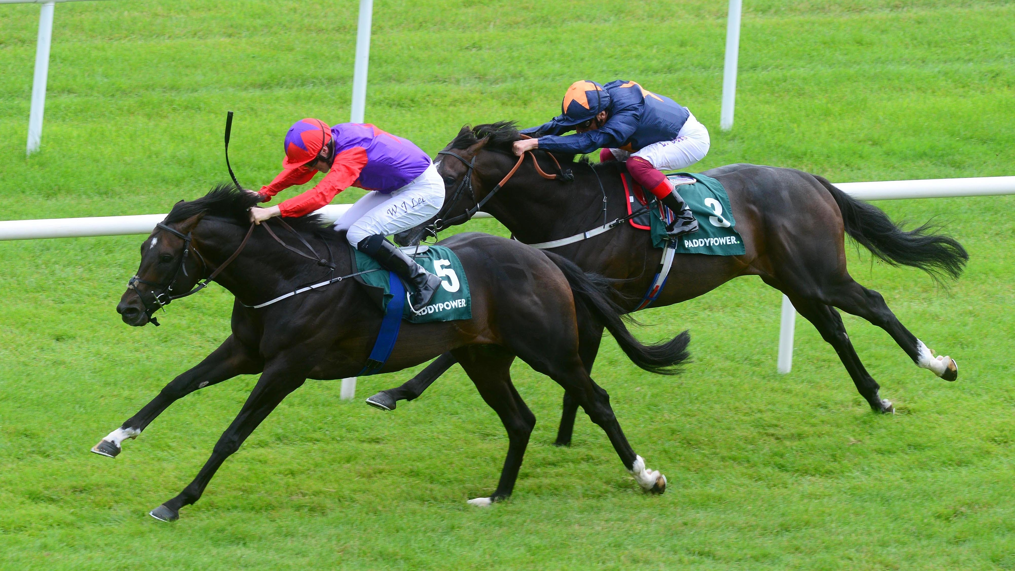 Romanised wins the Minstrel Stakes at the Curragh Racecourse