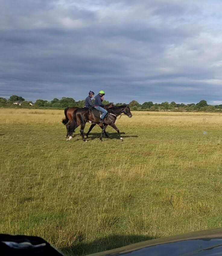 **Horses to Follow Update August2018