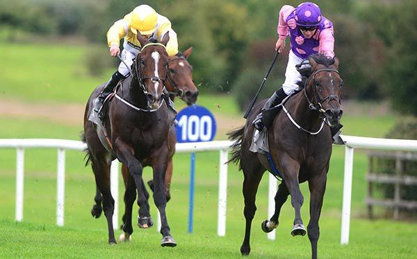 Lady Marengo gets off the mark at Navan